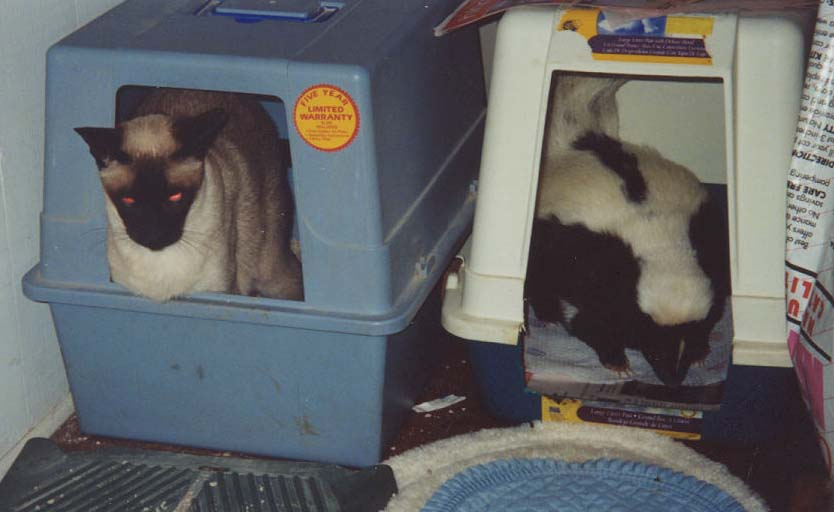 Typical covered cat litter box compared to one modified for a skunk